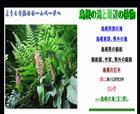 島根の滝と周辺の植物