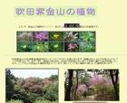吹田市紫金山公園の植物